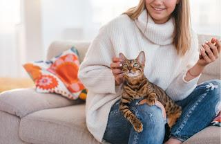 ¿Cómo saber si mi gato tiene confianza en mí?
