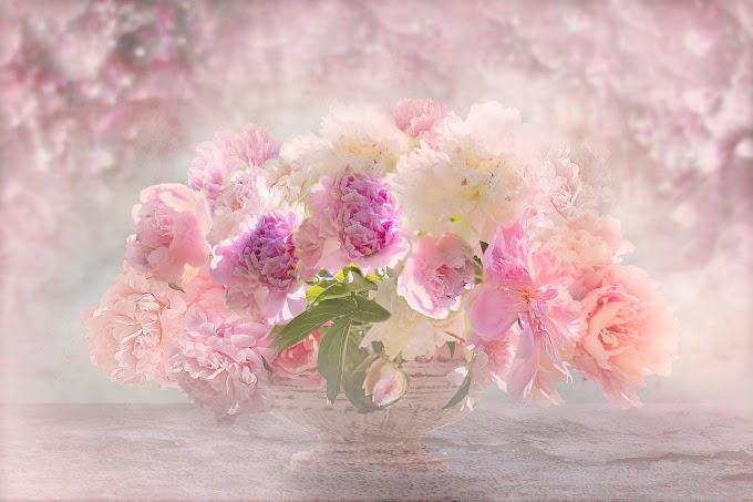 Vaso com Flores Lindas