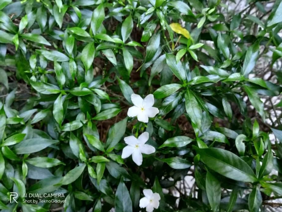 Realme C11 Camera Sample - Flowers, Close-up