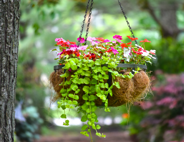 Who Has Hanging Flower Baskets On Sale : Ms toody goo shoes a hanging flower basket for all seasons