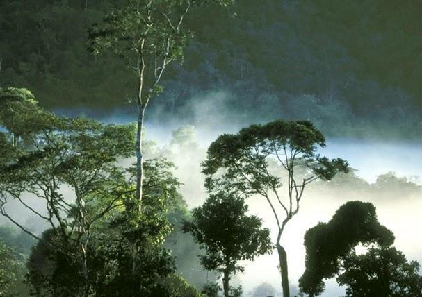 kabut asap di hutan belantara