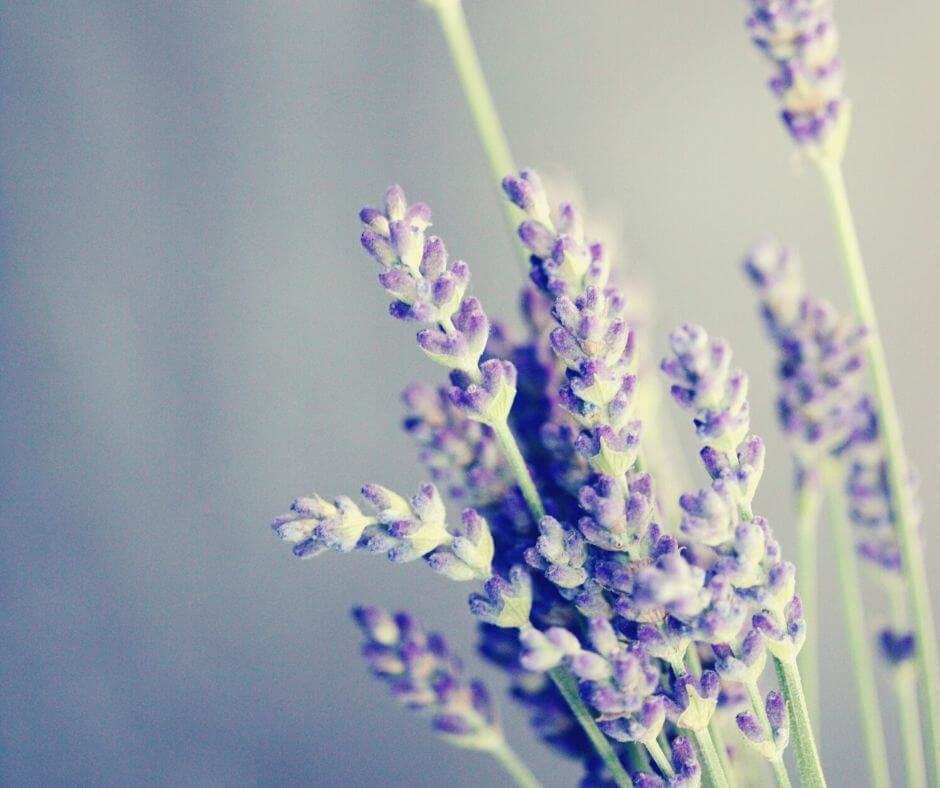 Clean Your House To Clear Your Head | I love the lavender scent around my home.