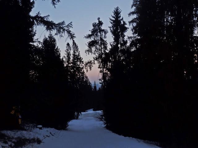 """W Jurgowie możemy skorzystać z """"nielegalnego"""" skrótu wiodącego przez las"""