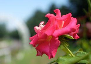 Gambar Thumbnail Buram