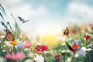 Σπορά λουλουδιών, μύθοι και πραγματικότητες