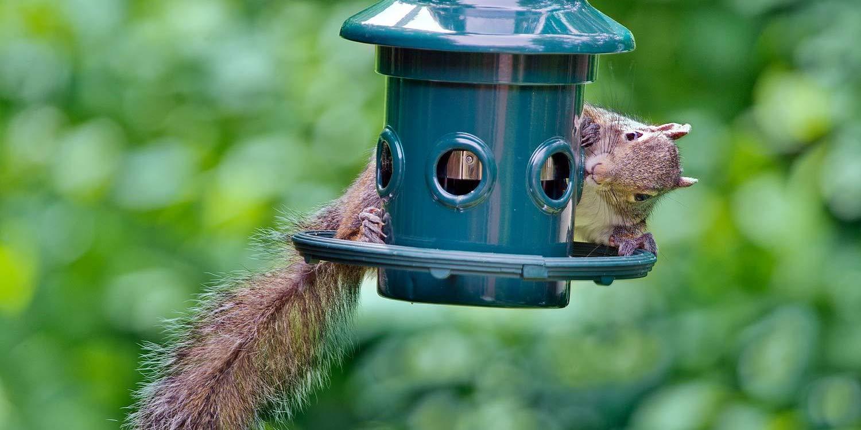 Weight activated squirrel proof bird feeders   Best Squirrel Proof