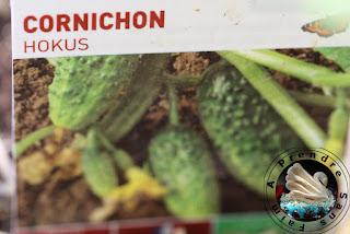 Tout savoir sur les cornichons (pas à pas en photos)