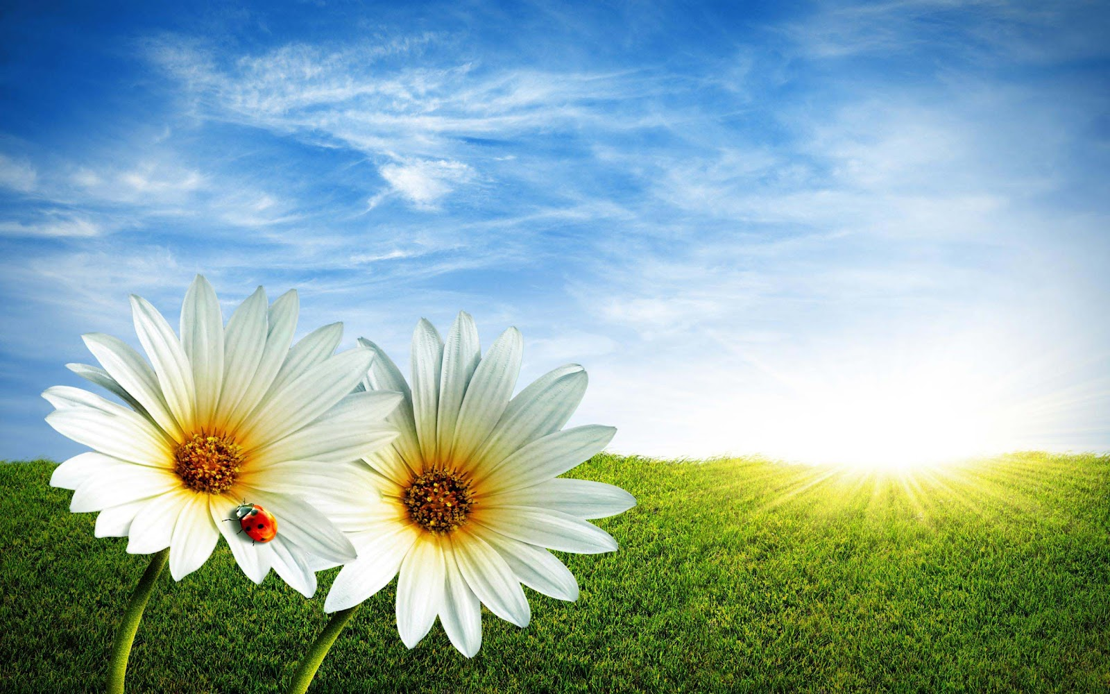 Backgrounds spring wallpapers top best hd wallpapers for - Free computer backgrounds for spring ...