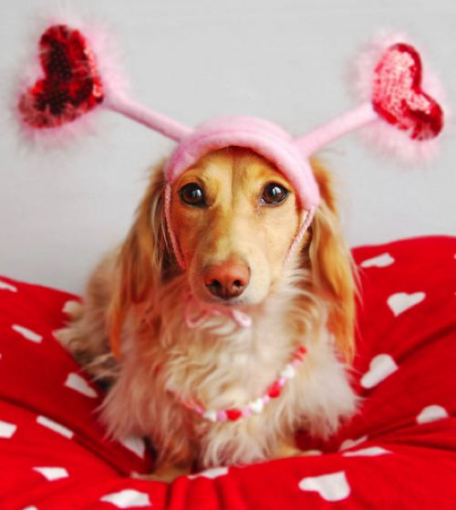 Extremely cute valentines day animals pets cute and docile - Valentines day pictures with puppies ...