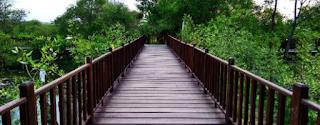 Taman Wisata Hutan Mangrove Gunung Anyar
