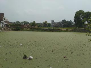 राजातालाब के ऐतिहासिक संगम तालाब पर पड़ी गंदगी की चादर | #NayaSaveraNetwork