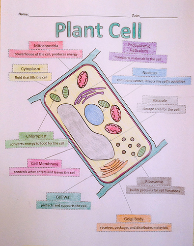 A School Called Home: Growing Some Plant Cells