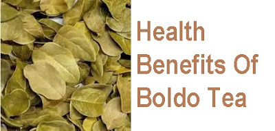 Incredible Health Benefits Of Boldo Tea