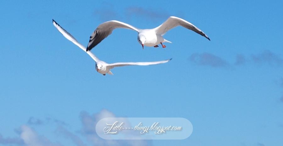 seagulls, Poland seagulls