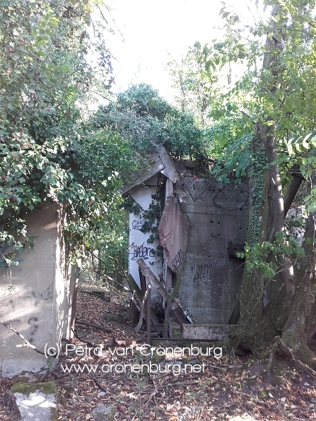 Efeu erobert Ruinen