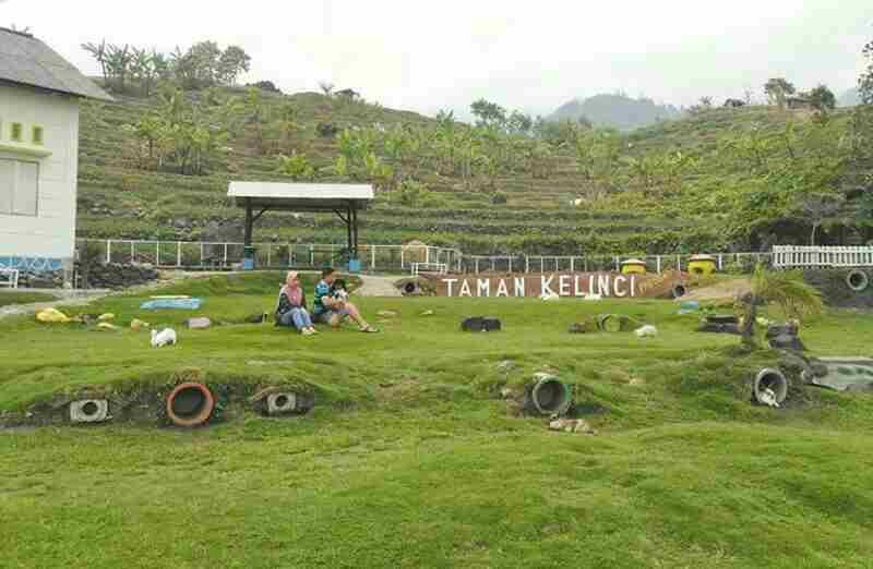 Lokasi Htm Taman Kelinci Padusan Yang Menggemaskan