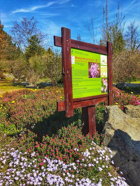 rośliny w Arboretum, podpisane tablice informacyjne