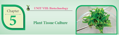 CLASS 12 BIOLOGY BOTANY - CHAPTER 5 PLANT TISSUE CULTURE - 1 MARK QUESTIONS - ONLINE TEST