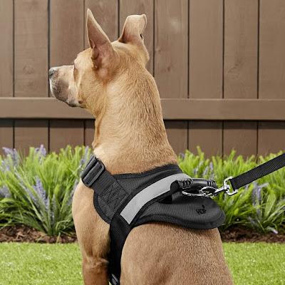 Pitbull harness