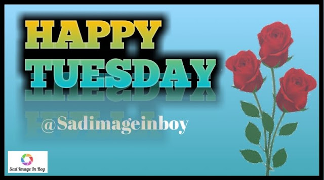 Happy Tuesday images   happy tuesday funny, tuesday morning images with quotes, tuesday ecards