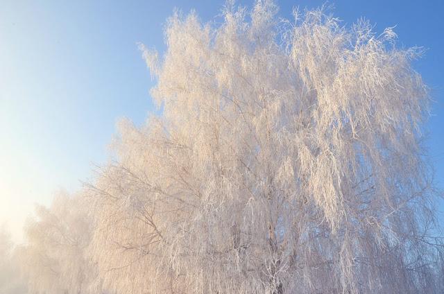 Дубоссарская зима