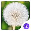 Dandelion|APUS Launcher theme