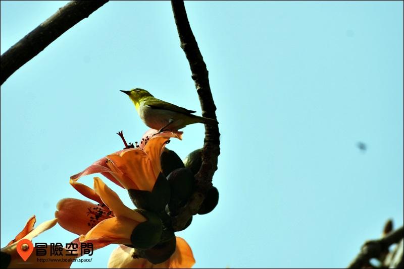 台中鳥類攝影