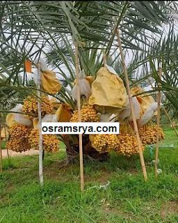 بدون تكاليف او خبرة تعرف على اهم الزراعات المربحة في مصر 2021 | كيف تبداء مشروع زراعى ناجح و مربح بدون راس مال او خبرة | زراعة مربحة بدون راس مال