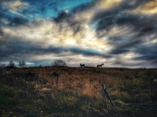 Connemara landscape, moody sky and Connemara ponies