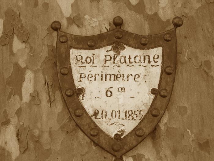 Platane Saint Guilhem