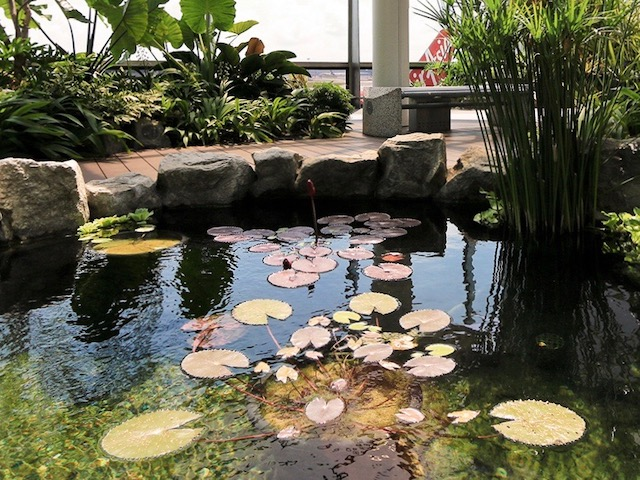 Water Lily Garden Changi