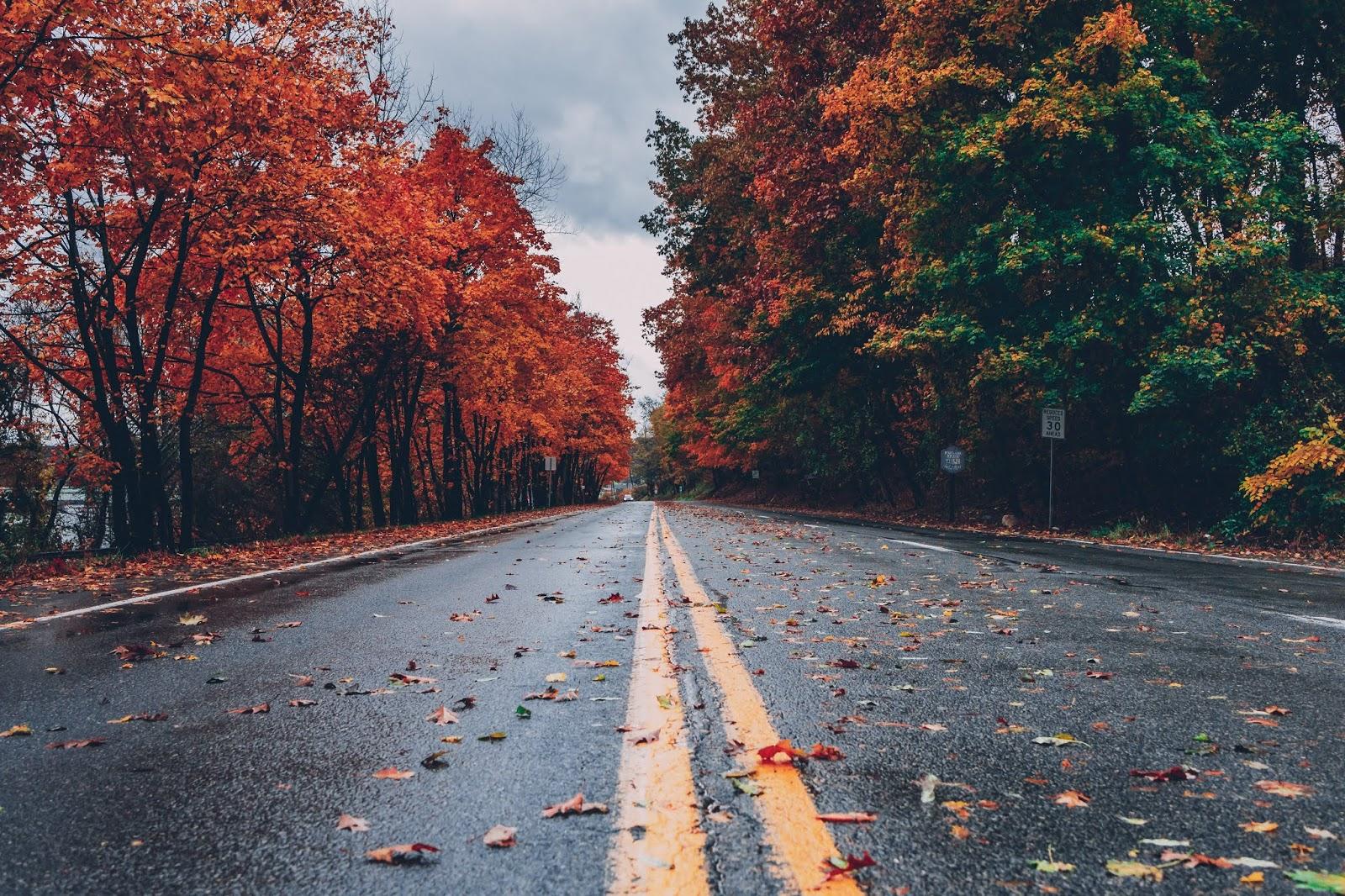 Musim gugur di jepang