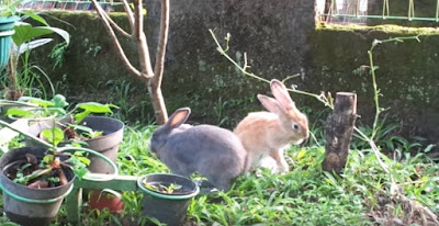 gambar kelinci lucu di halaman