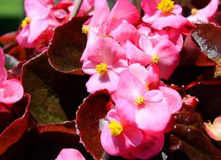 Sejuta Warna Seribu Arti Dari Keindahan Bunga Mawar  eb62eaed36