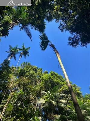 Trecho de floresta com céu azul ao fundo