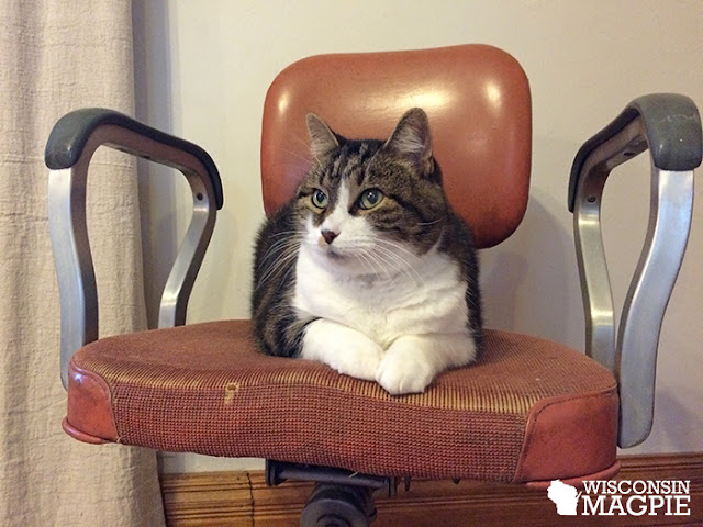 vintage office chair with cat