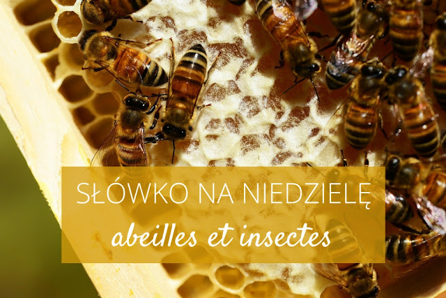 Słówko na niedzielę: abeilles et insectes