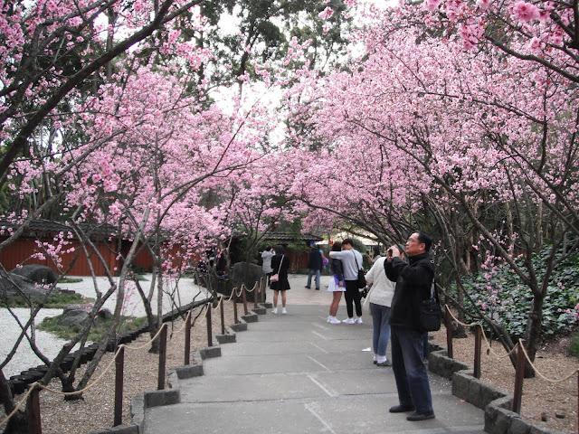 Nằm cách trung tâm Sydney 20 km về phía tây, Auburn Botanic Gardens được xem là ốc đảo bình yên giữa thành phố trẻ sôi động. Khu vườn tuyệt đẹp này mang cảnh quan truyền thống của Nhật Bản với cây cầu bắc qua suối, hồ nước tĩnh lặng và những đàn cá Koi bơi lượn. Vào cuối đông, đầu xuân (khoảng tháng 8), nơi đây diễn ra lễ hội hoa anh đào thu hút đông đảo du khách check-in.