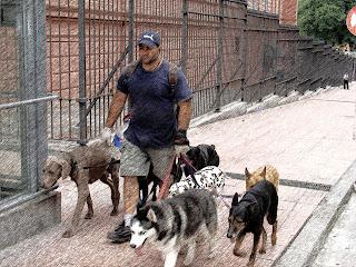 Condutor de Cachorros, em Frente à Casa Rosada, em Buenos Aires