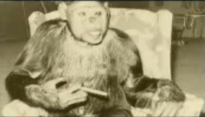 Benarkah, Ilmuwan Pernah Berhasil Ciptakan Hibrida Manusia-Simpanse?