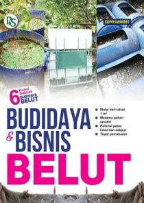 BUDIDAYA BISNIS BELUT