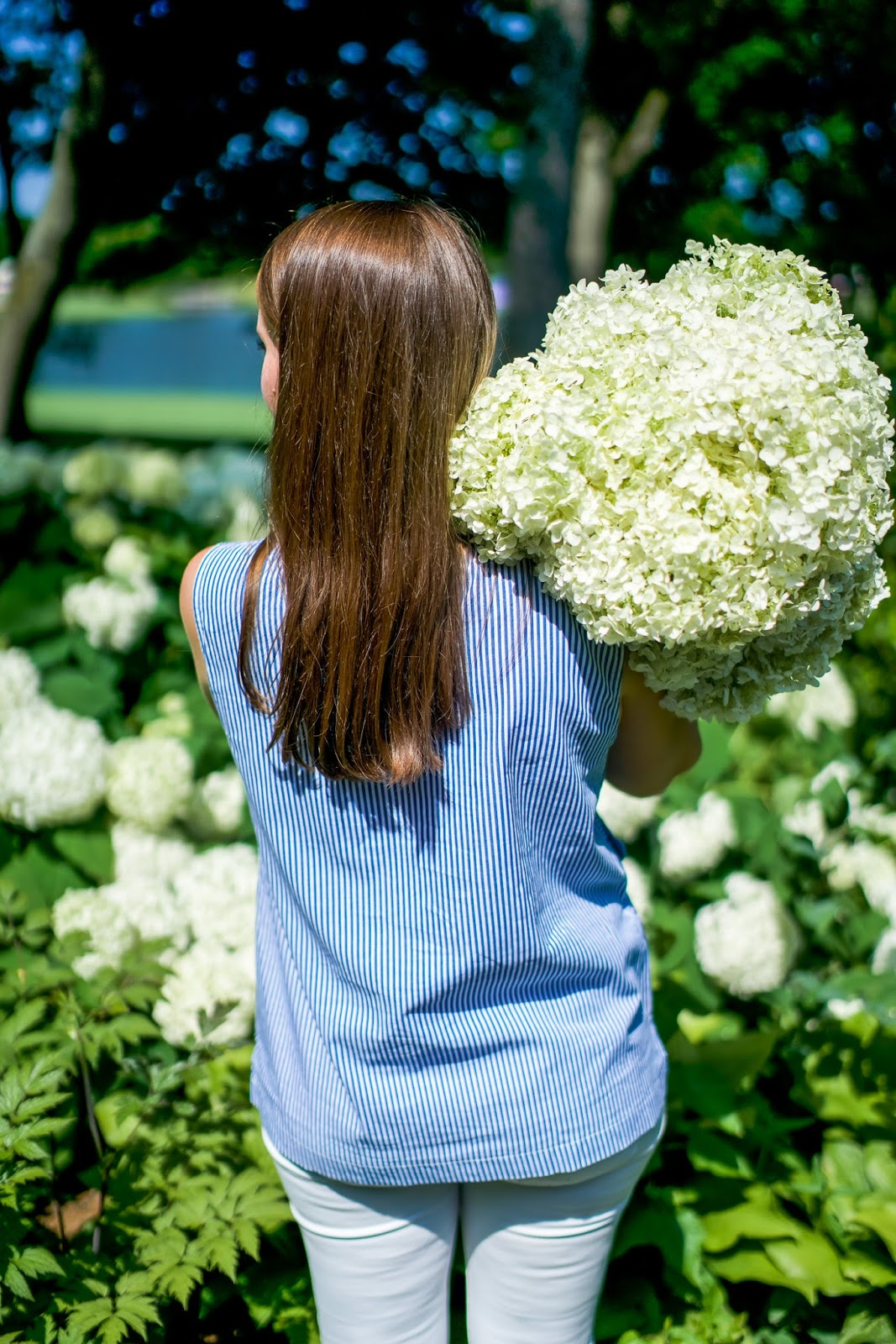 3 Tips For Keeping Hydrangeas Alive And Not Wilting Covering The