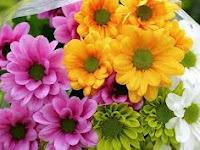 5 Macam Bunga Yang Bisa Di Buat Makan Dan Baik Untuk Kesehatan