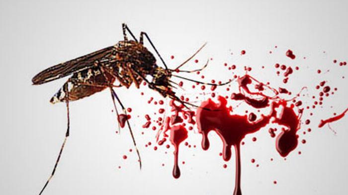 Obat Demam Berdarah Di Apotik