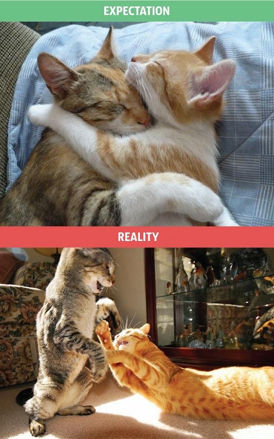 La vida con un gato: expectativas vs realidad