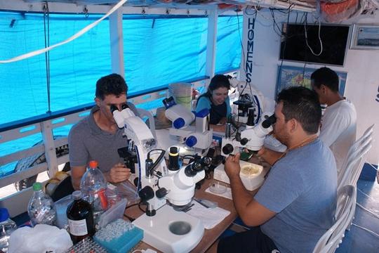 Pesquisa na Ufopa analisa presença de parasitos na pescada-branca