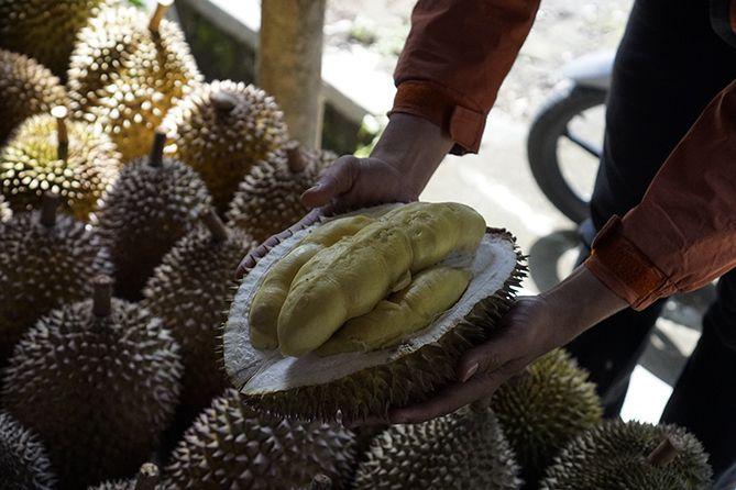 Memotret durian yang sudah dibelah