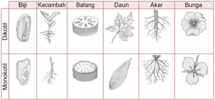 tumbuhan-berbiji-terbuka-yang-dapat-dijadikan-sebagai-tanaman-hias-adalah