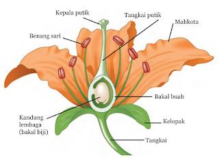 Struktur dan Fungsi Bunga