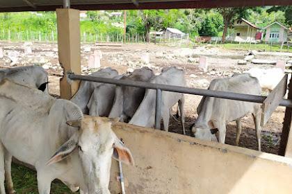 Gara-gara Leumoe Ban Saboh Aceh Gabuek Ureueng keu Bhaih Leumoe